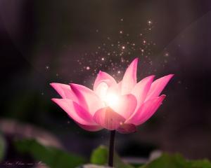 free-lotus-flower-wallpaper